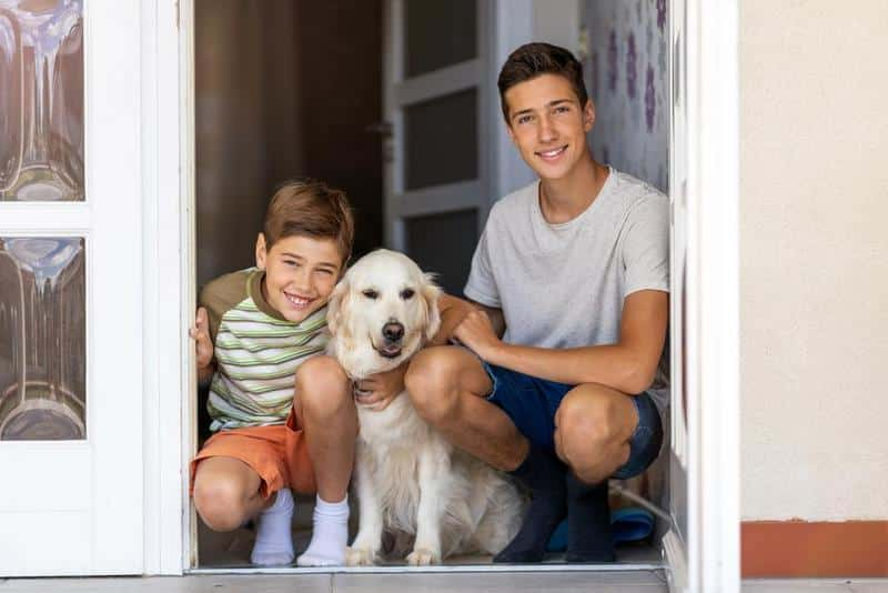 Electronic Dog Door Buyer's Guide