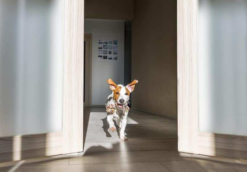 Electronic Dog Door Frequently Asked Questions