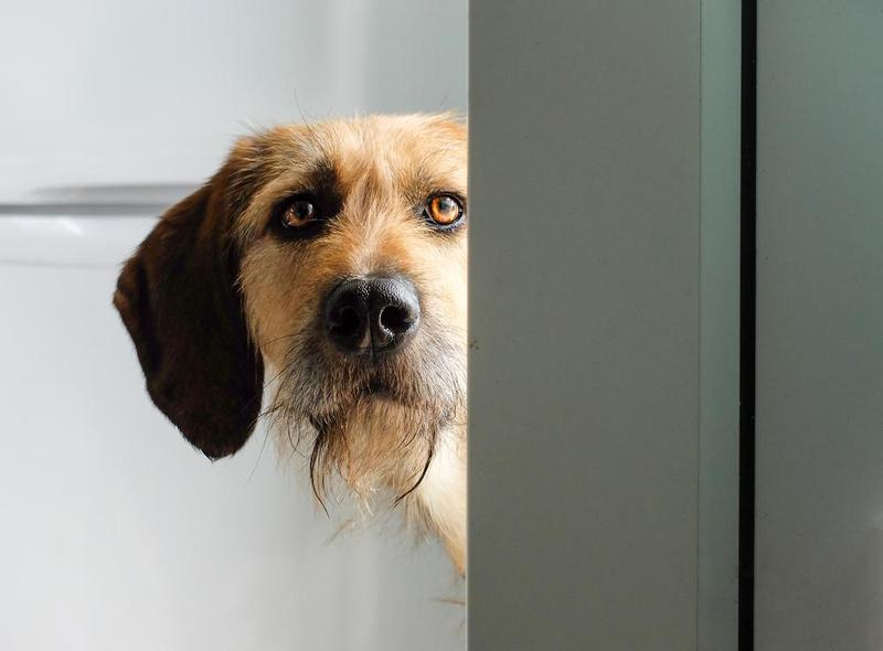 Introduction To Electronic Dog Doors