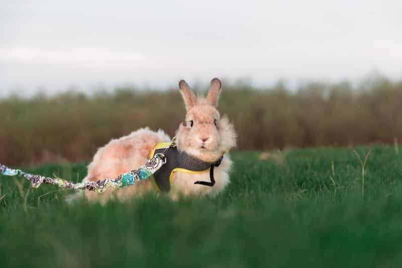 Top 10 Reviewed Best Rabbit Harnesses 2021.