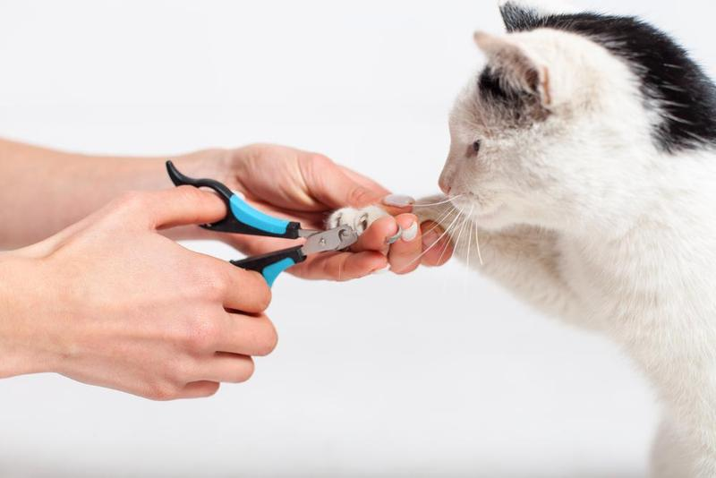Best Nail Clippers For Cats - Buying Guide