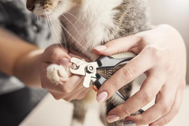 How To Cut Cat Claws With Nail Clippers